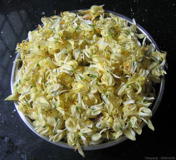 Fleurs Moringa