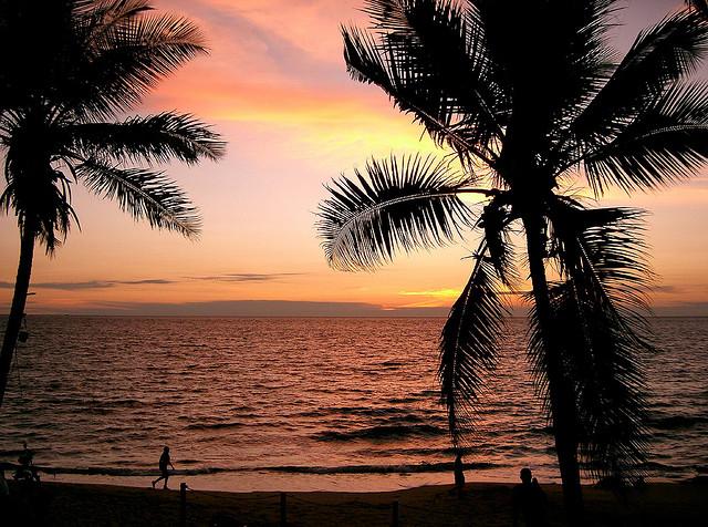 Kribi palmier - plage Cameroun