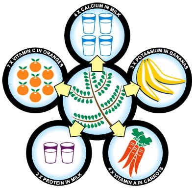 moringa-nutrition