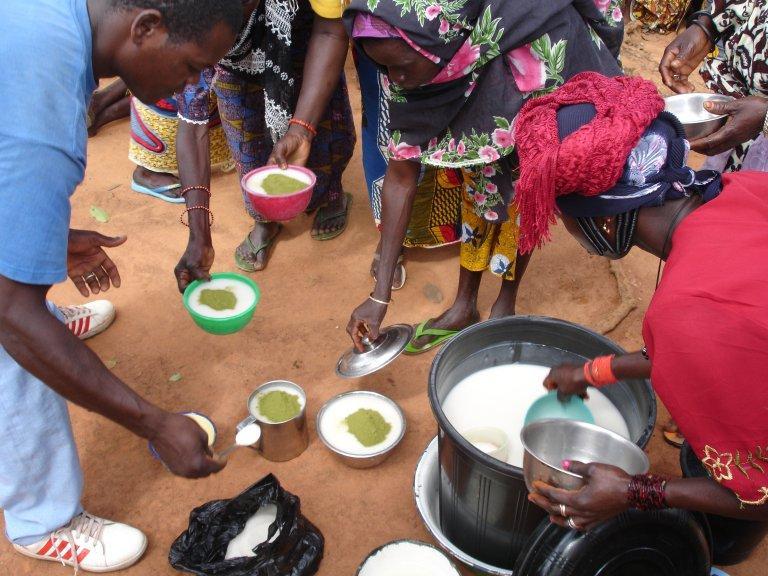 Consommation du Moringa: de la poudre de feuilles dans le lait et avec du sucre