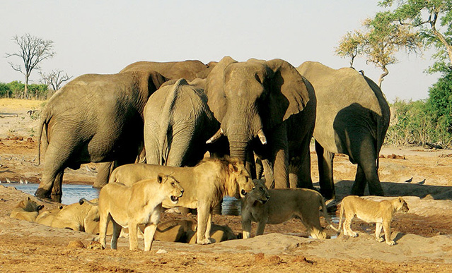 reserve-moremi-botswana