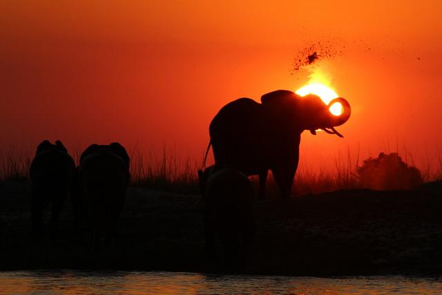 Chobe-national-park-éléphant