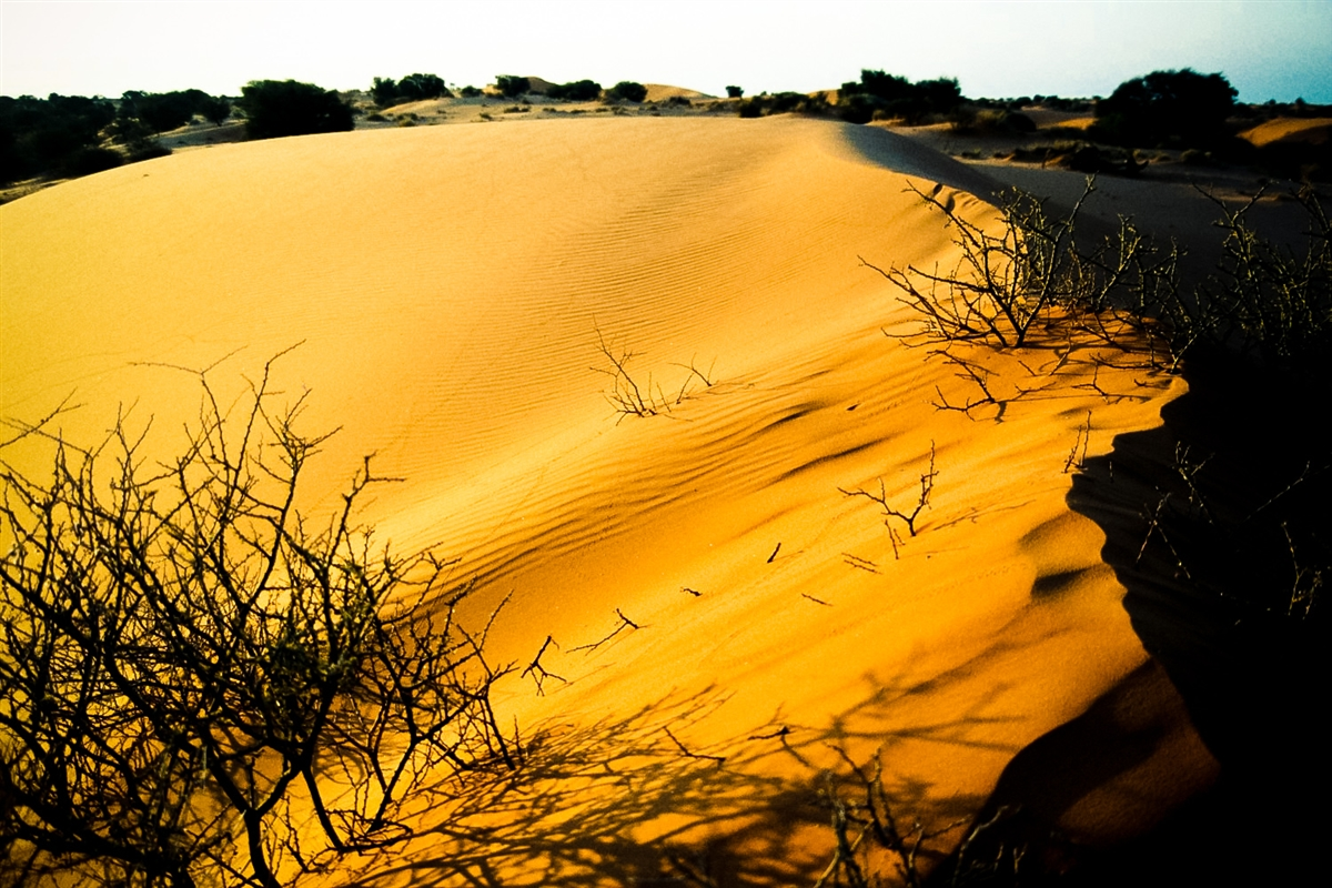kalahari-desert-landscape
