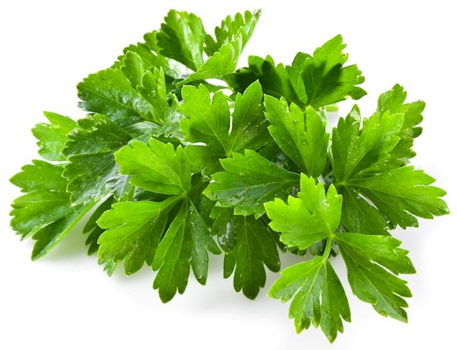 cilantro - coriandre purifie eau
