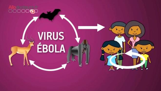 ebola-transmission