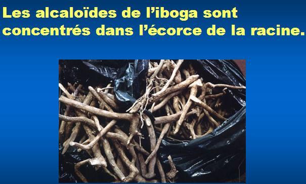 les racines de l'iboga - les alcaloides