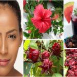 5 bienfaits de la fleur d'hibiscus (bissap) pour les cheveux.