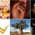 Huile de Baobab : ses bienfaits pour la peau, les cheveux et la santé.