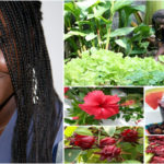 Maguette Wade: successful senegalese entrepreneur thanks to bissap (hibiscus)