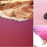 Visiter le Lac Rose « Retba » au Sénégal