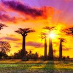 L'allée des Baobabs : un lieu magique à visiter | Madagascar