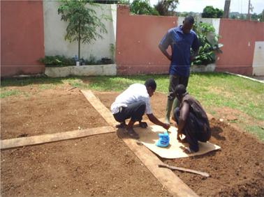 5 Semez votre Moringa et Harvest, après 60j de croissance