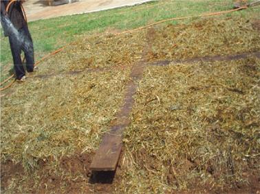 6. Mulch avec de l'herbe et de l'eau