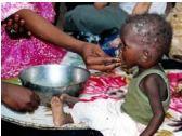 Enfants démunis mangeant du Moringa