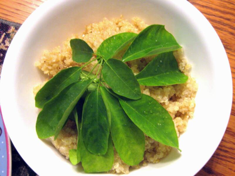 Moringa Stenopetala avec Quinoa
