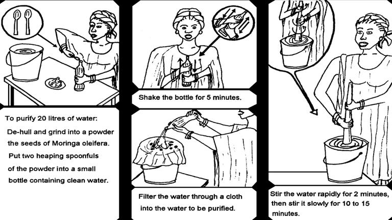 Purifier eau grâce au Moringa Oleifera