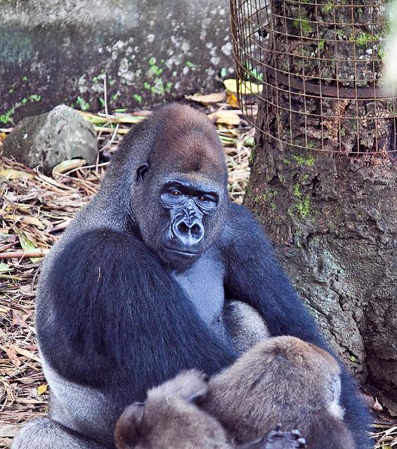 Zoo Limbe -Cameroun