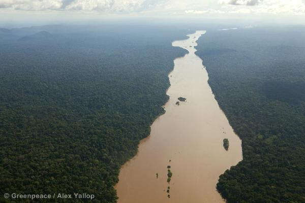 la foret tropicale camerounaise - Cameroun