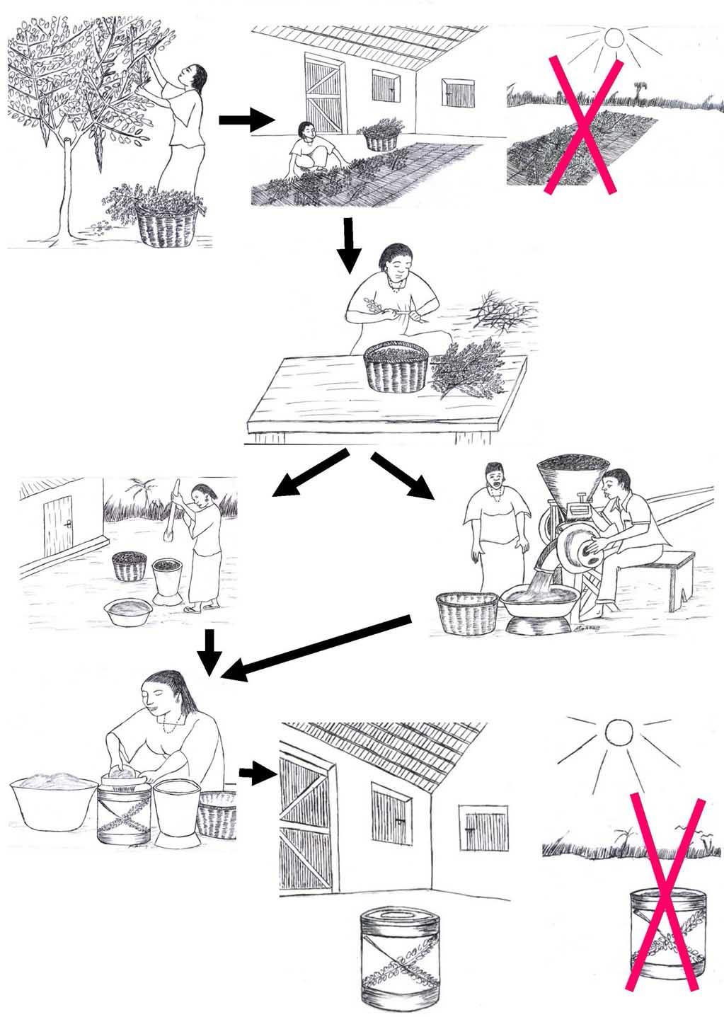 methode fabriquer le Moringa Oleifera en poudre