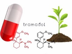 plante nauclea latifolia plus puissante que le tramadol