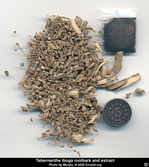 tabernanthe_iboga rootbark and extract