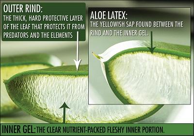 aloe-latex