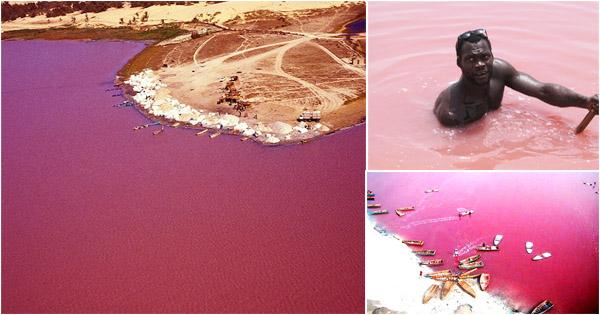 Vist A Pink Lake (Retba) | Senegal vacations – Afroculture.net